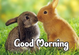 Good Morning Images HD 1080p Download 46