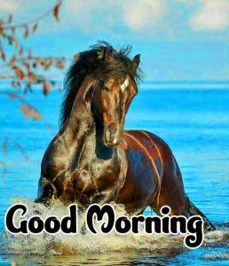 Good Morning Images HD 1080p Download 74
