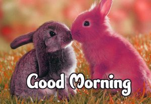 Good Morning Images HD 1080p Download 90