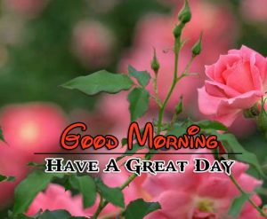 Latest Good Morning Images HD Free Pictures