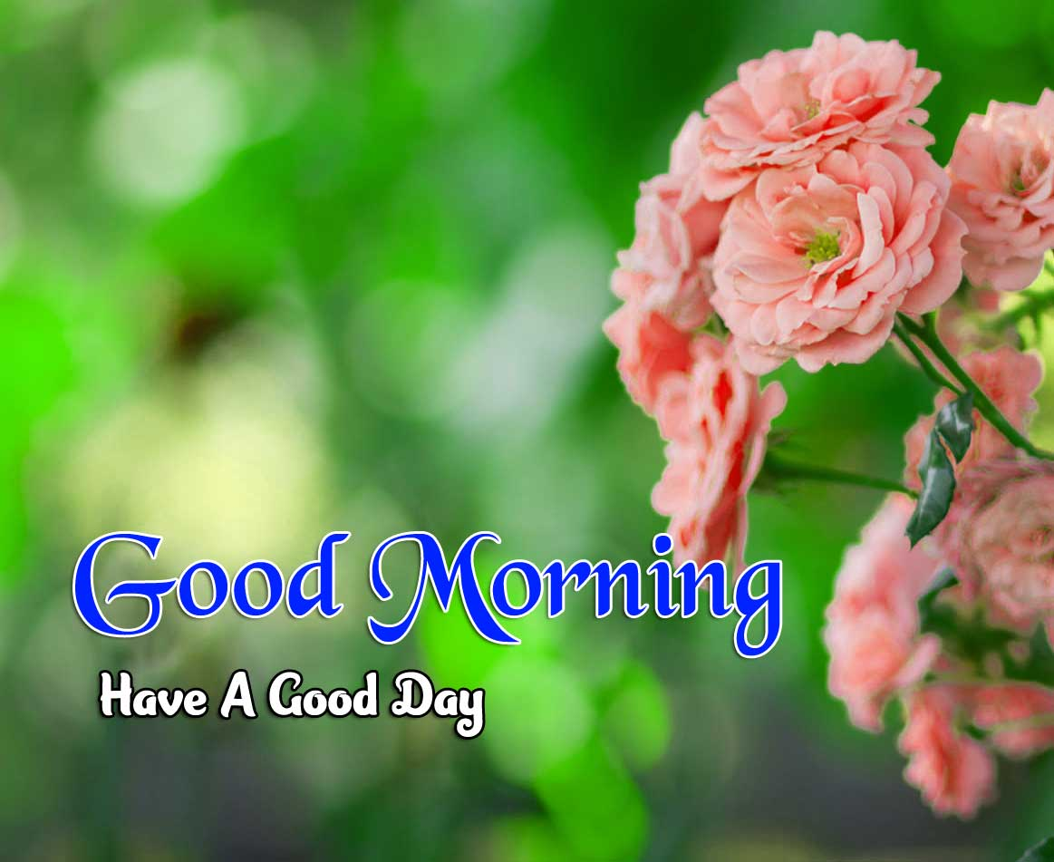 Top 102 Good Morning Images Wallpaper {Collection 2020 }