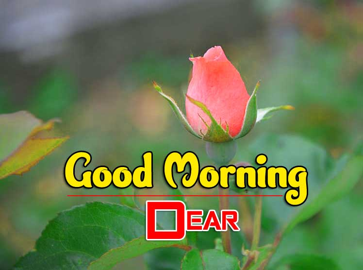 71+ good Morning Images Wallpaper Photo Pictures Pics For Wife