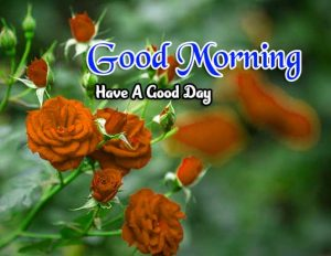 New Good Morning Photo Images
